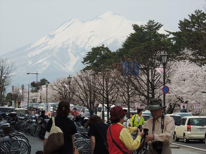 H26510桜 323_R