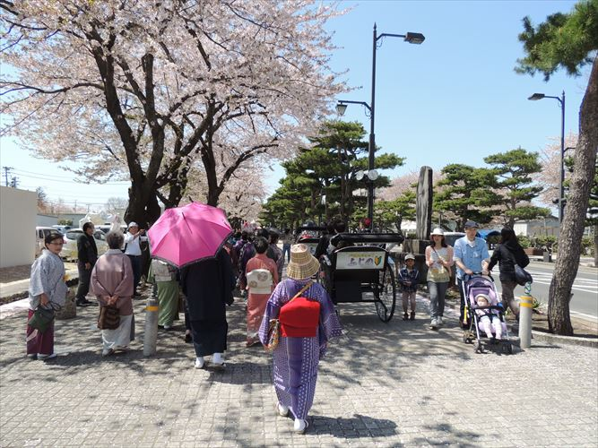 H26510桜 569_R