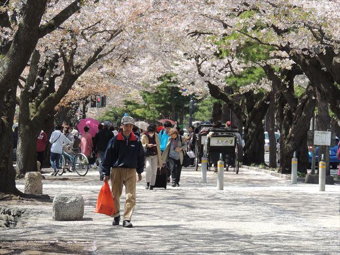 H26510桜 599_R