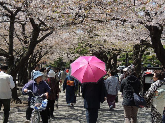 H26510桜 587_R