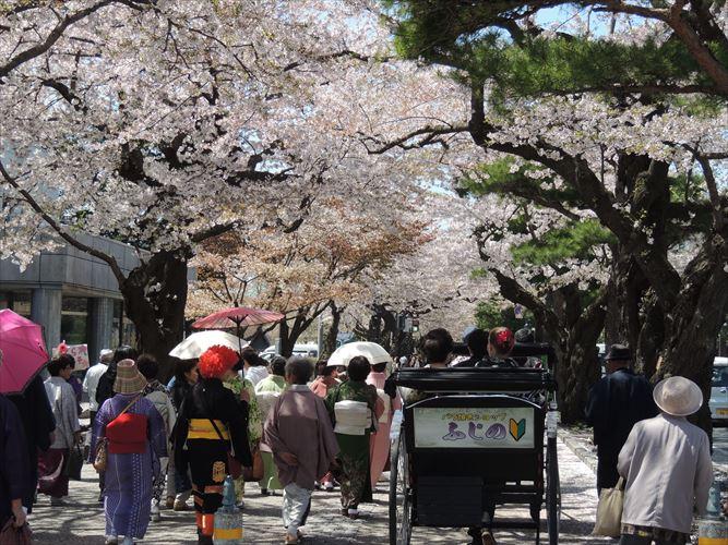 H26510桜 595_R