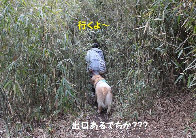 IMG_0112.jpg