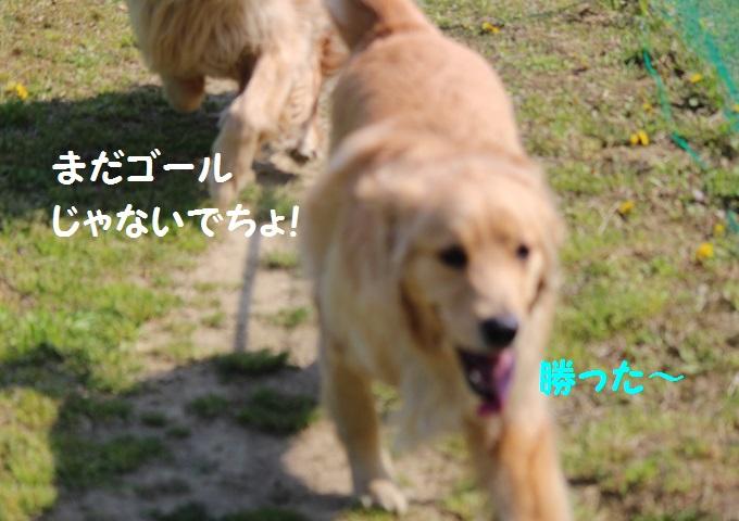IMG_0434_20140505232240803.jpg