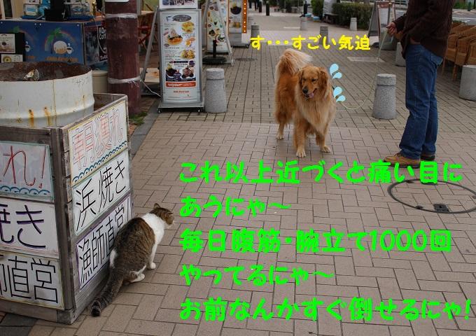 IMG_0610_20140514233427360.jpg