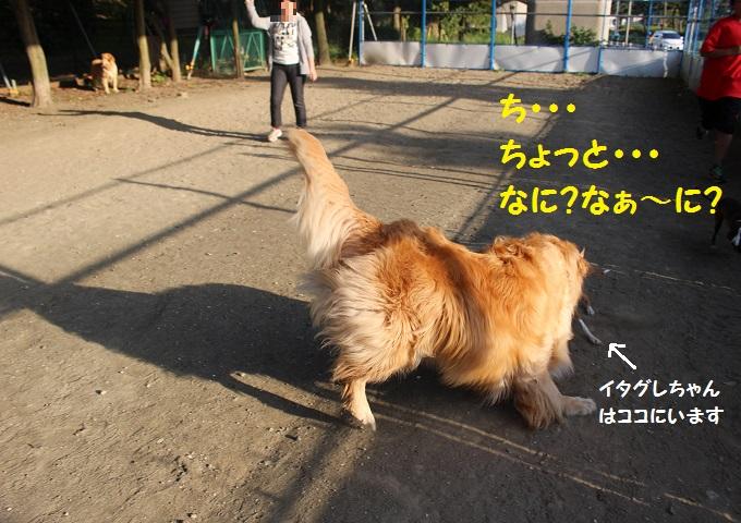 IMG_1084.jpg