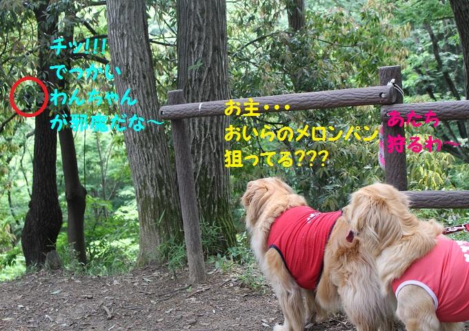 IMG_1306.jpg