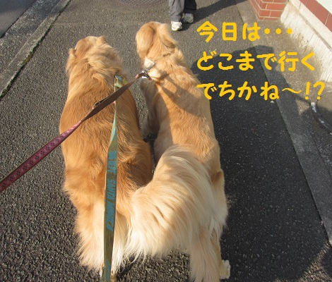 IMG_2717.jpg