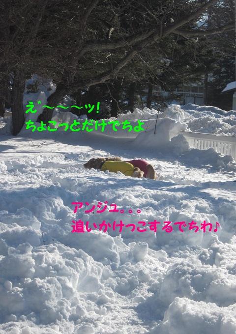 IMG_3371.jpg