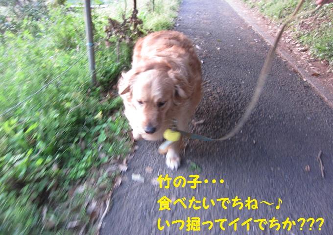 IMG_3800.jpg