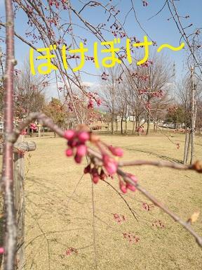 2014-04-13-20-09-52_deco.jpg