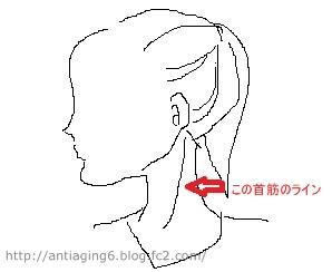 ココが胸鎖乳突筋