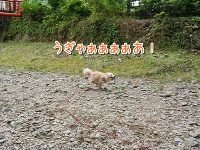 20140605_3.jpg