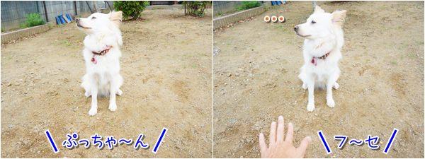 20140629_3.jpg