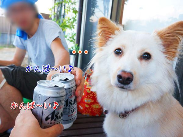 20140720_3.jpg
