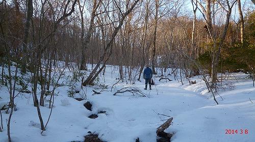 s-ブナ・ミズナラの原生林の雪景色20140308
