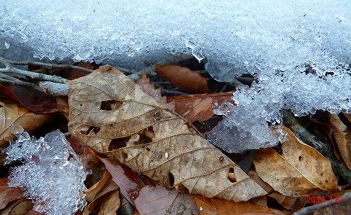 s-枯れ葉と雪