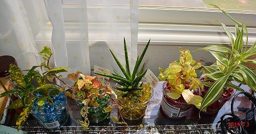 s-窓辺の観葉植物20140503