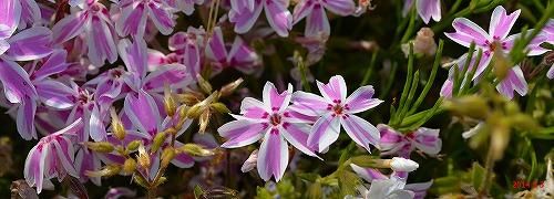 s-春の庭20140503