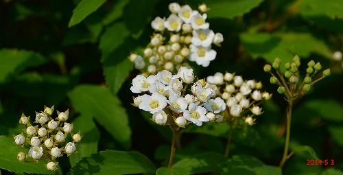 s-春の庭④20140503