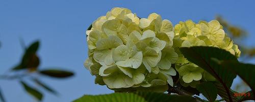 s-春の庭⑤20140503