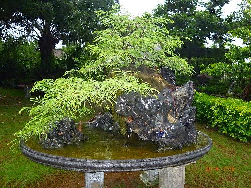 s-盆栽①20140729