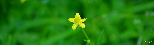 s-黄色い花⑤20140803