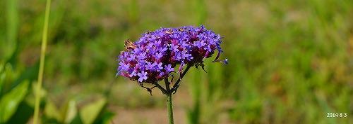 s-紫の花②20140803