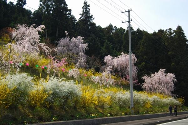 桜ロード6
