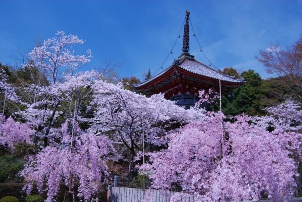熊谷寺14
