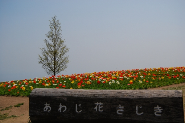 花さじき13