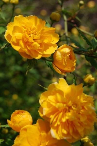 春の花15