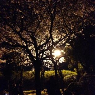 湊山公園(錦公園)夜