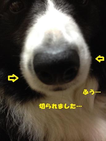 IMG_2878-1.jpg