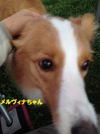 IMG_3522-1.jpg