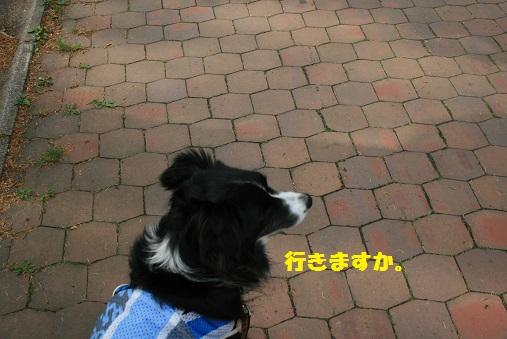 IMG_7287-2.jpg
