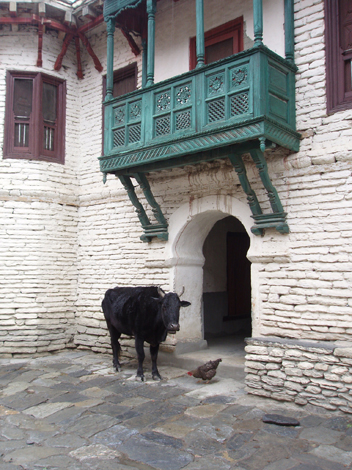 ネパール牛と鶏
