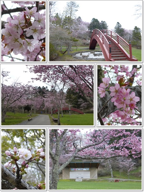 子の日公園2014年5月13日1