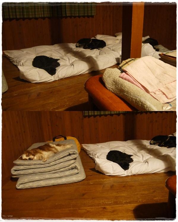 cats_20140512212616442.jpg