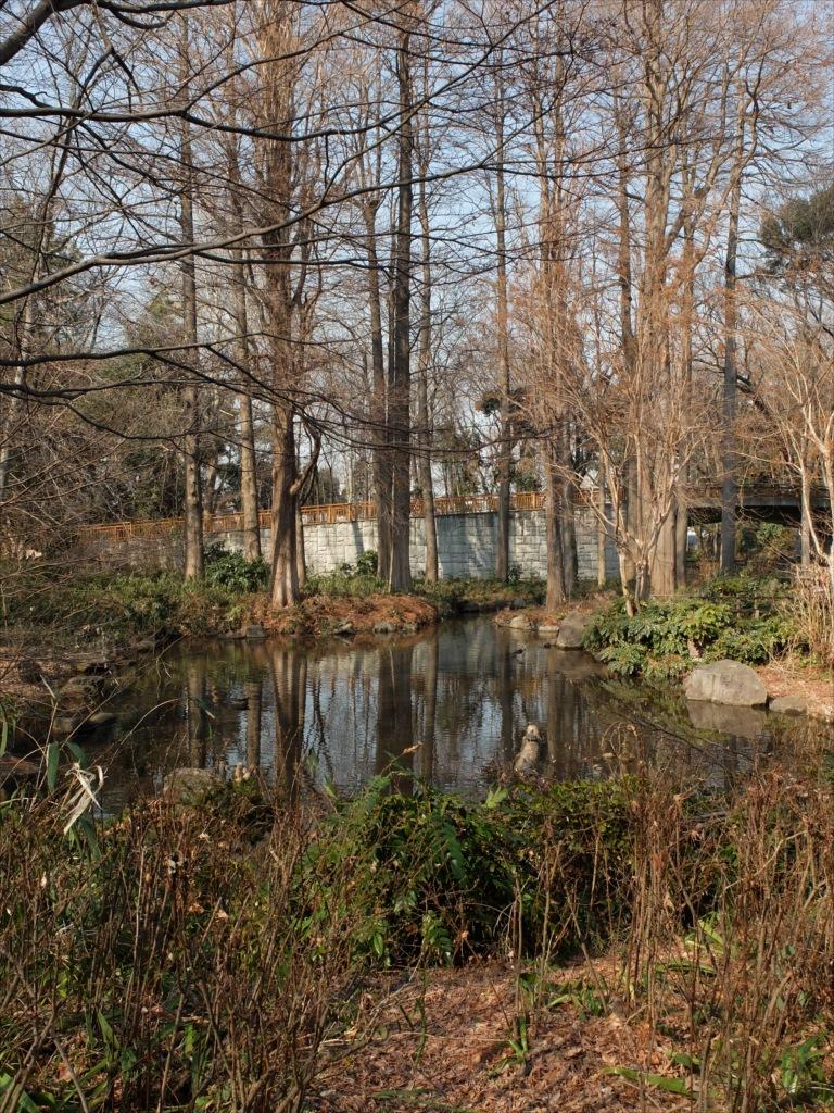 小さな池_1