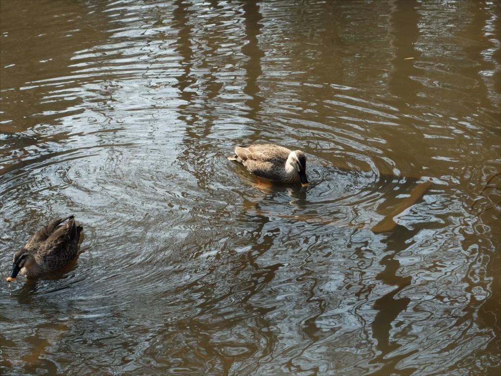 小さな池_2