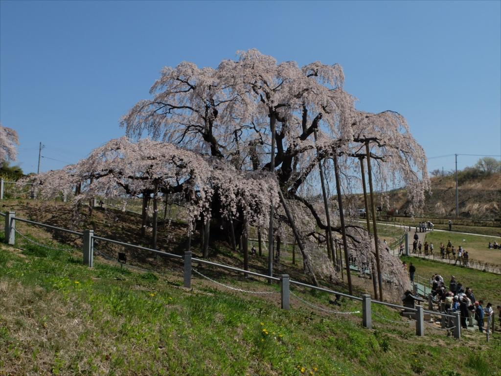 滝桜_20