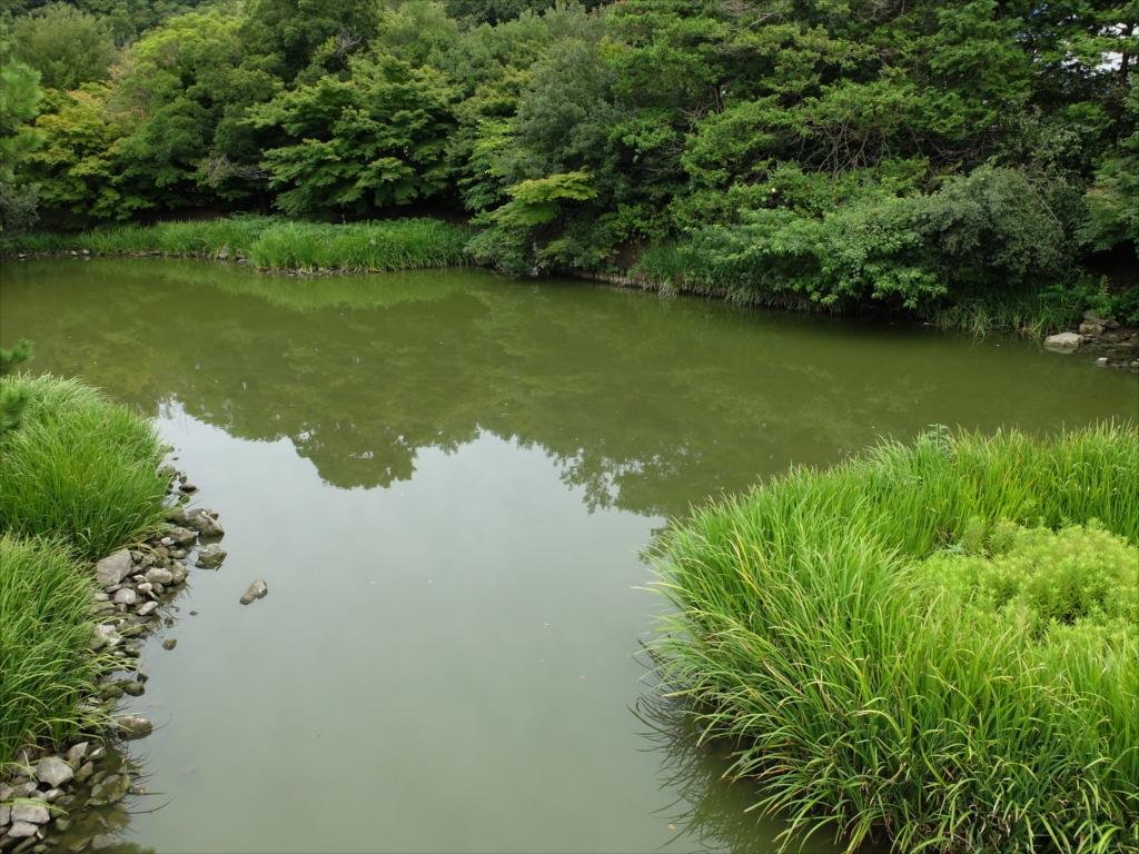 橋の上から見た阿字ヶ池の右側の様子_2