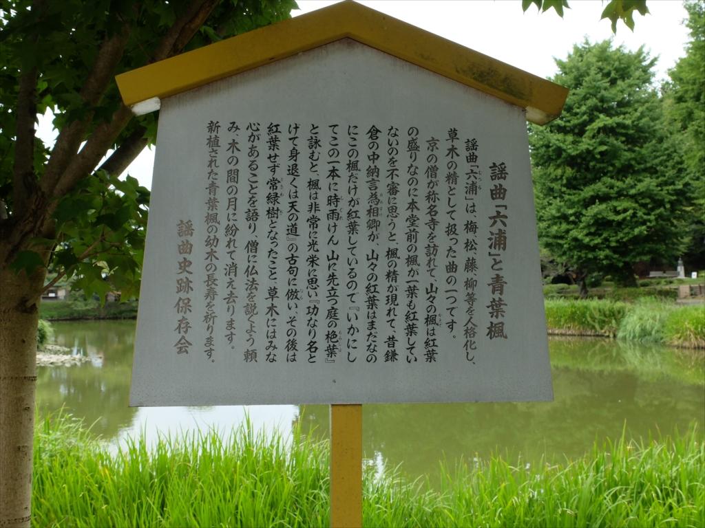 謡曲「六浦」と青葉楓_1