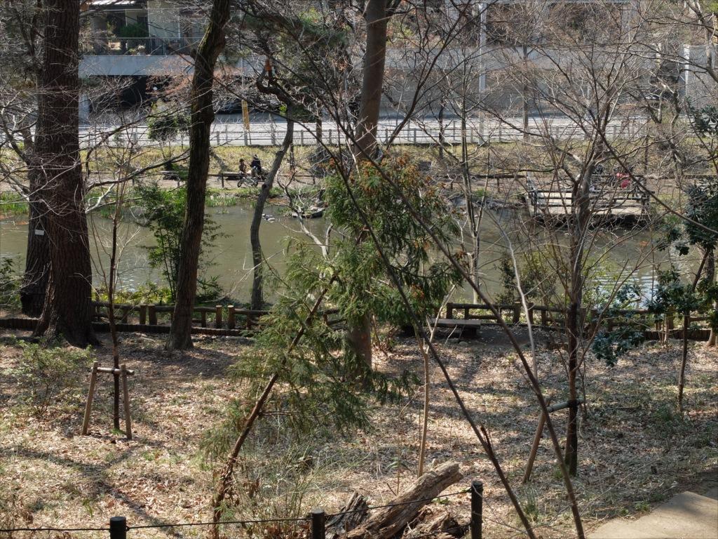 宝来公園の池_1
