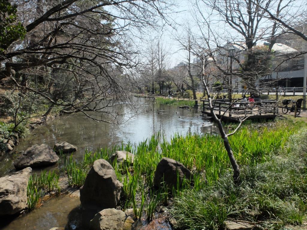 宝来公園の池_2