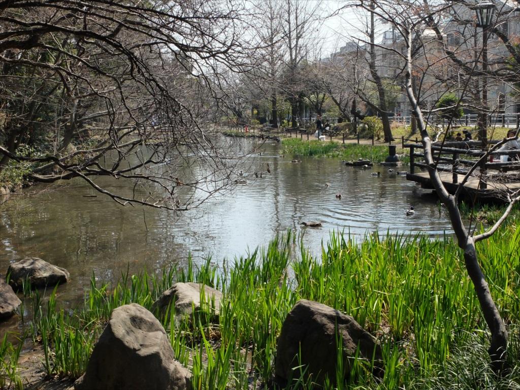 宝来公園の池_3