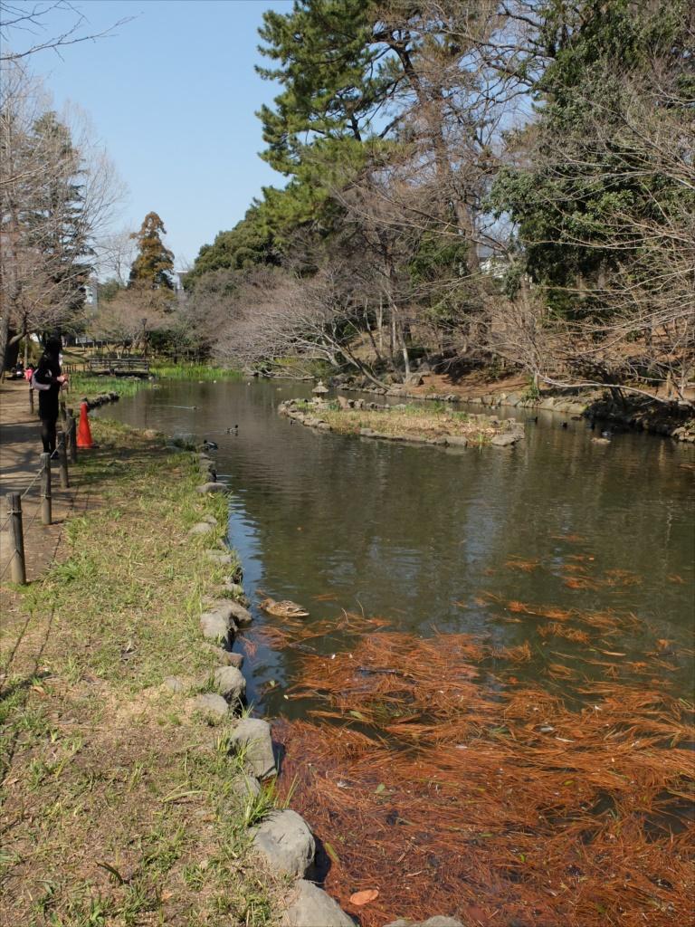 宝来公園の池_4
