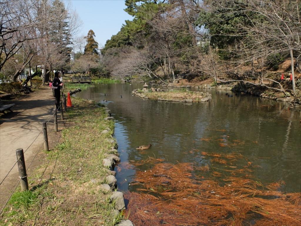 宝来公園の池_5