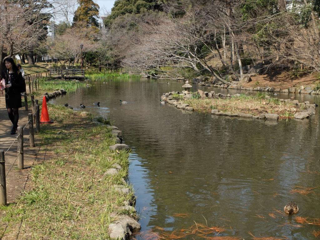 宝来公園の池_6