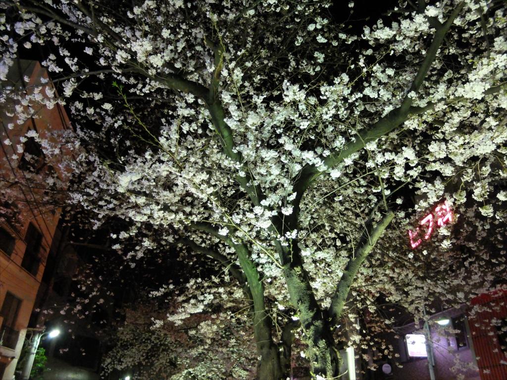 夜間の桜_X-20_1